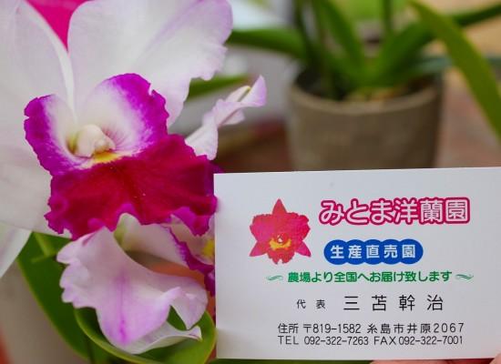 三苫洋ラン園 (4)